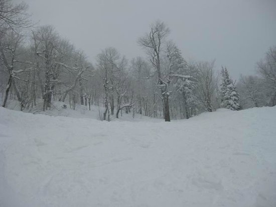Mad River:                   MRG on a powder day is heaven!  Yep, I took em and yep, I own them