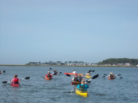 Old Town Canoe And Kayak Assateague Island Tours