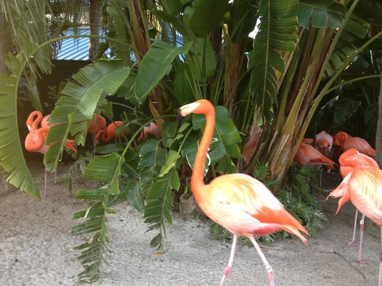 Renaissance Orlando at SeaWorld: Flamingos!