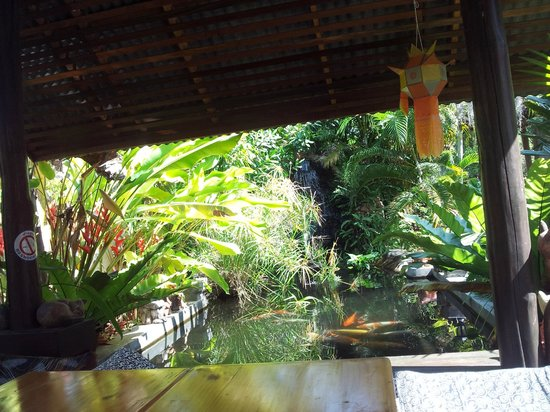 Bueng Pai Farm:                   Tilted view of koi pond/waterfall from hammock in sala