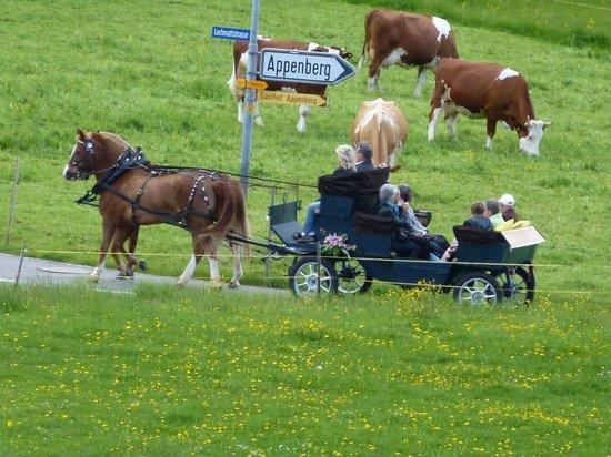 Hotel Appenberg :                   Ein Ausflug mit Pferd und Wagen ist auch Möglich!