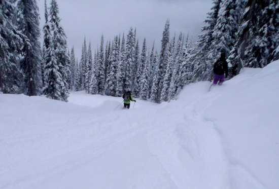 The Sutton Place Hotel Revelstoke Mountain Resort:                   powder run Revelstoke