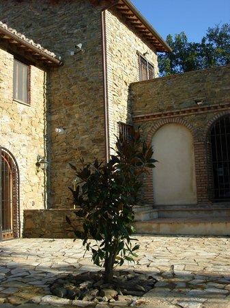 Castiglione della Valle, Italien:                   Magnolia tree in our courtyard