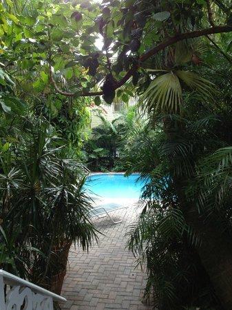 Tropical Inn:                   Walkway to the pool!