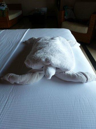 ฮิลตัน มัลดีฟส์ อีรุฟุชิ รีสอร์ท แอนด์ สปา:                   A towelling turtle