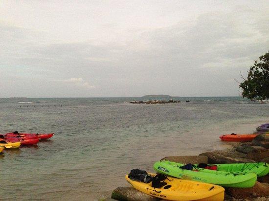 Bio Bay Kayaking :                   Bio Bay