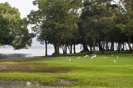 Amaya Lake:                   lago Kandalama desde el Hotel