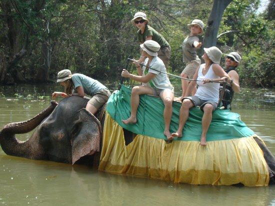 Amaya Lake:                   Paseo en Elefante en Haravanna