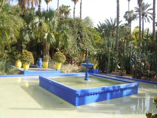 Cactus jardin majorelle picture of jardin majorelle for Jardin majorelle