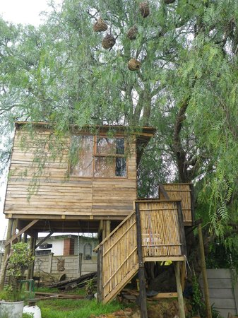 Whethu Backpackers: Tree House