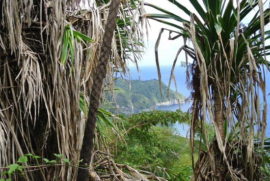 Jungle Bay, Dominica:                   View from above Jungle Bay Resort