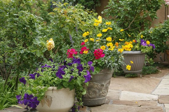 Hacienda Nicholas Bed & Breakfast Inn: Flowers Abound in our Garden Patio