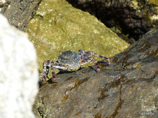 Hacienda Tres Rios:                                     Crabby friend