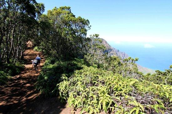 Pihea Trail Begins at Puuo Kila on Kauai, Hawaii