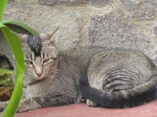 La Casa de Dona Lupe: Winery cat chillin'