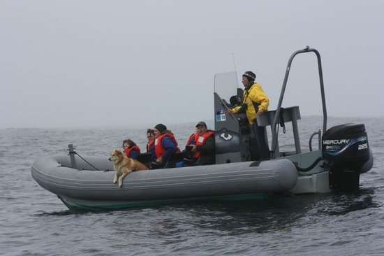 Whale Research EcoExcursions:                   the boats