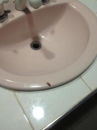 Sol Caribe San Andres:                                     cucarachas