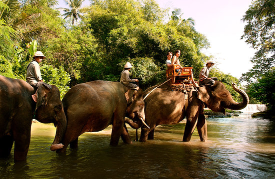 Bali Zoo: The Best Elephant Trail In Bali