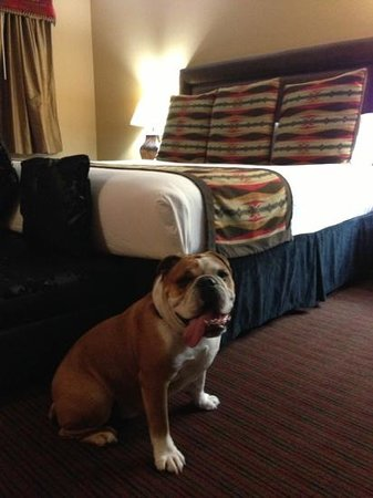 BEST WESTERN PLUS Inn of Santa Fe:                   dog friendly hotel-no extra charges!