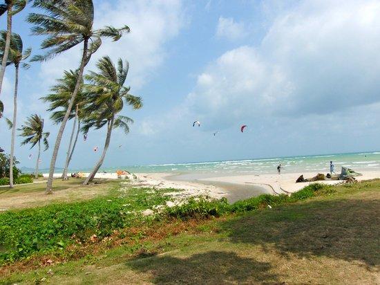 Samui Orchid The Ocean Resort:                   La plage
