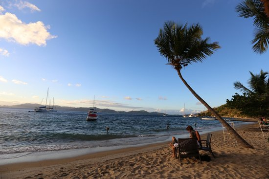 Cooper Island Beach Club:                   Palm blowing in the wind