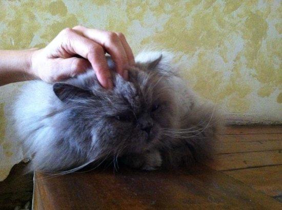 Posada Tambuca:                   gato-samuel♥