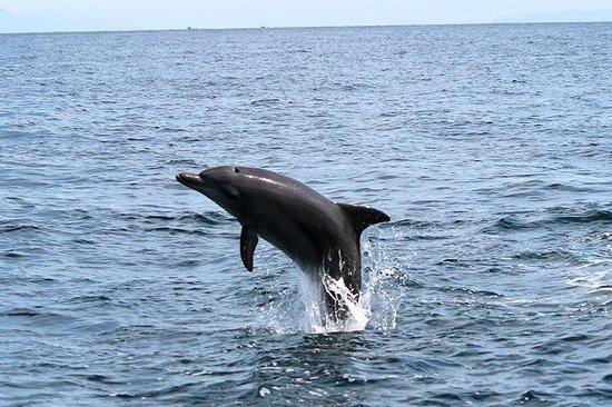 Seacruise: イルカのジャンプ