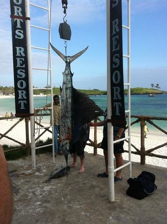 Ocean Sports Resort:                                     Fish was on the menu...