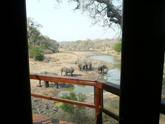 Hamiltons Tented Safari Camp: view from room 1