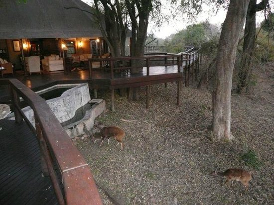 Hamiltons Tented Safari Camp: view from man lodge deck