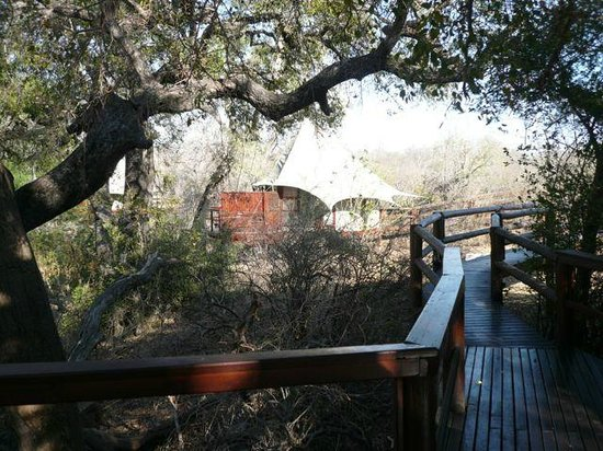 Hamiltons Tented Safari Camp: walkway to room