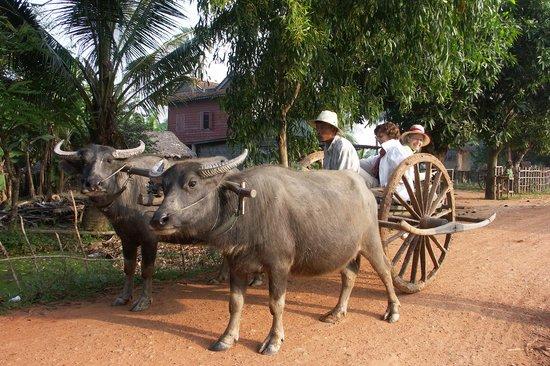 buffalo cart シェム リアップ buffalo trailsの写真 トリップ
