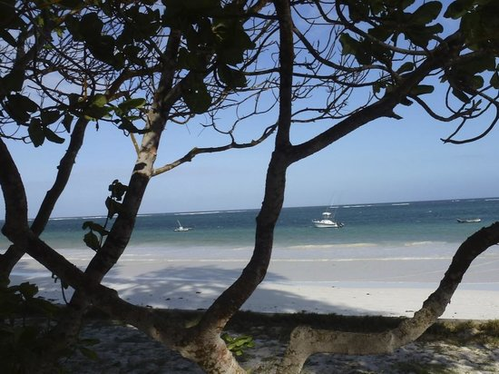 Diani Sea Resort: View from sunbed