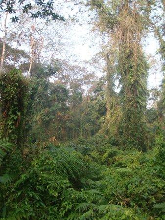 Tinsukia, Hindistan: Typical habitat