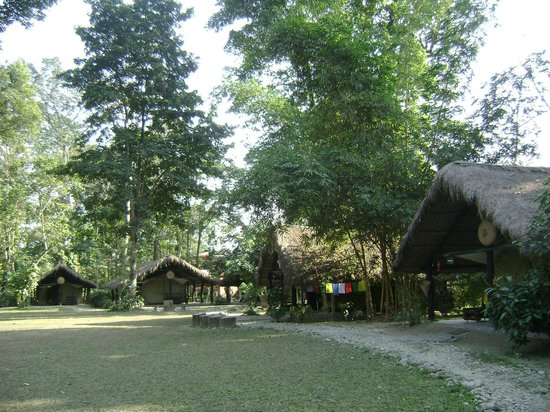 Nameri Eco Camp:                   Cottages