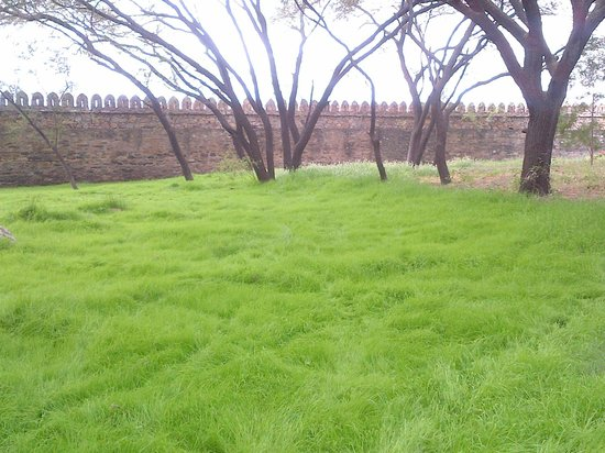 Trident Udaipur: Lush Green