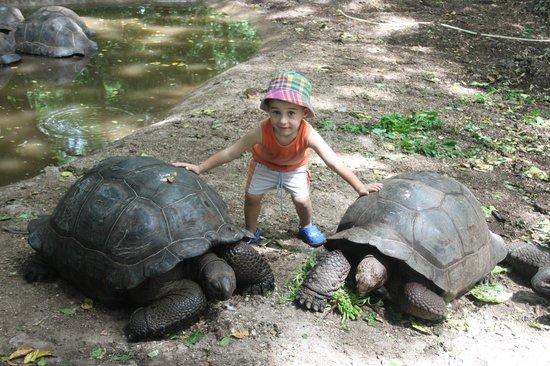 Kobe House:                   tartarughe giganti
