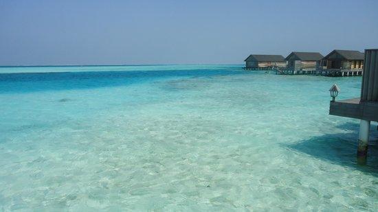 Gangehi Island Resort:                   vista sul mare dagli overwater                 