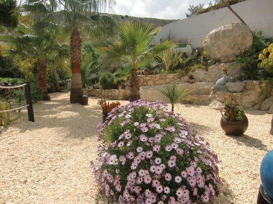 Hotel Las Calas: jardín
