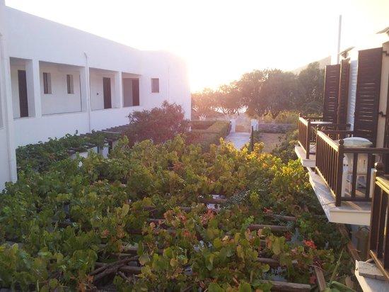 Hotel Boulis:                   La vue du palier de l'étage, sous la treille, le restaurant