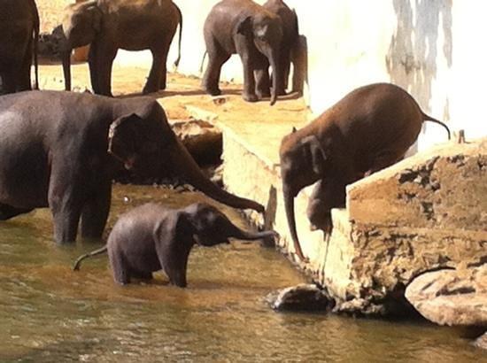 هوتل إليفانت بارك:                   bain des éléphants                 