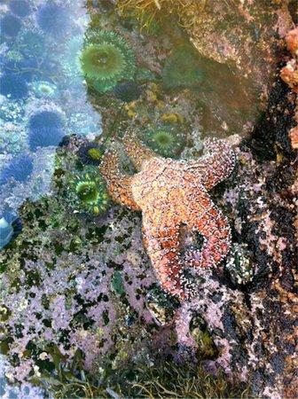 Montage Laguna Beach: Tidal pool