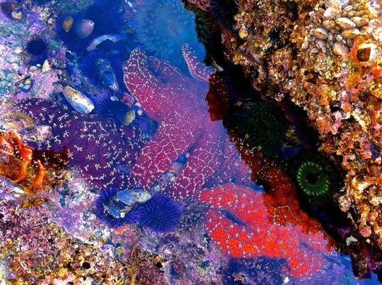 Montage Laguna Beach: Starfish