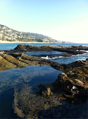 Montage Laguna Beach: Tidal pools