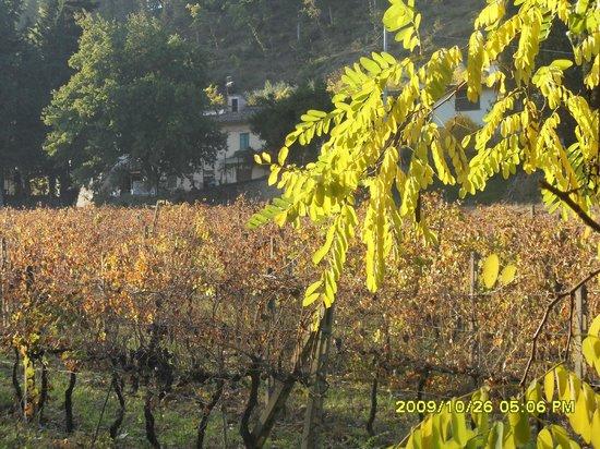Agriturismo Lucciano: Panoramico
