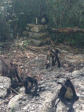 Tulum Monkey Sanctuary