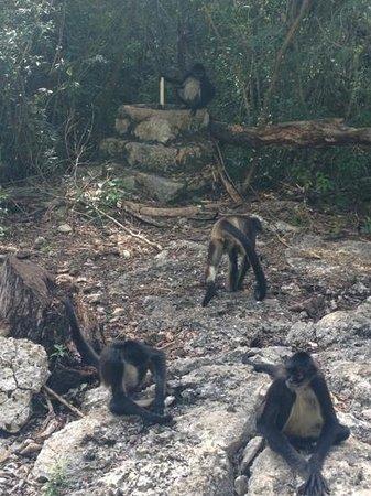 Tulum Monkey Sanctuary