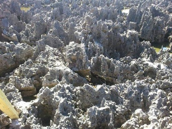 Grand Cayman Cruise Excursions:                   Limestone formations in Hell, Grand Cayman