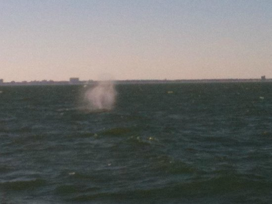 Rudee Flipper: Spray from the blow hole of the Whale