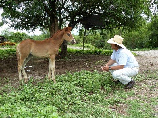 Estancia San Agustin:                   Don Carlos et la nouvelle génération de pasos